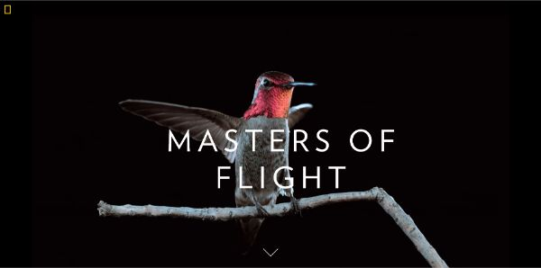 Nat Geo uses videos extensively for a great web experience